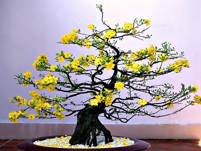 5 loài cây cảnh cho phòng khách hút lộc ngày tết