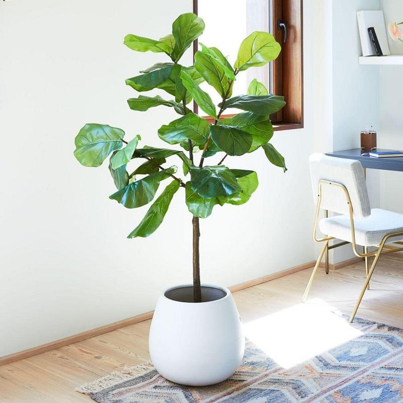 Đặt cây Bàng tại vị trí trung tâm để hạn chế sự trống trải
