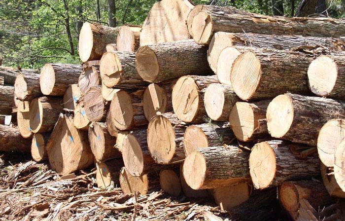 Sử dụng gỗ thông để sản xuất nội thất